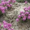 9 bitki türüne koruma.