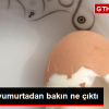 Kahvaltı İçin Kaynattığı Yumurtadan Bir Yumurta Daha Çıktı