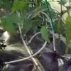 Topraksız Tarım,Marul, Domates, Biber, Salatalık  hydroponic system Sera