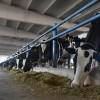 Devlet desteğiyle günde 5 bin litre süt üretiyor