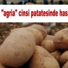 """Şuhut'un """"Agria"""" Cinsi Patatesinde Hasat Zamanı"""