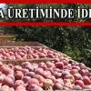 Niğde elma üretiminde iddialı