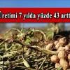 Osmaniye'de yer fıstığı üretimi 7 yılda yüzde 43 arttı