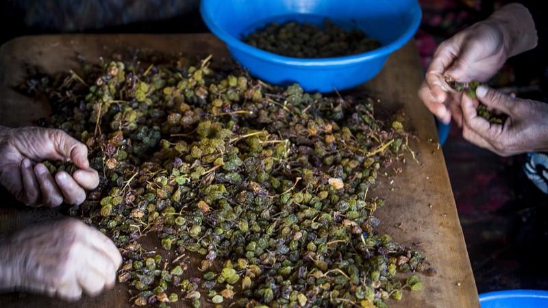 Gök üzüm sadece Konya'da.