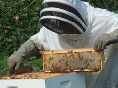 Arıcılara Yüzde 70 Hibe Desteği.