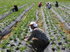 Doğu Karadeniz'de tarım istihdamı düştü.