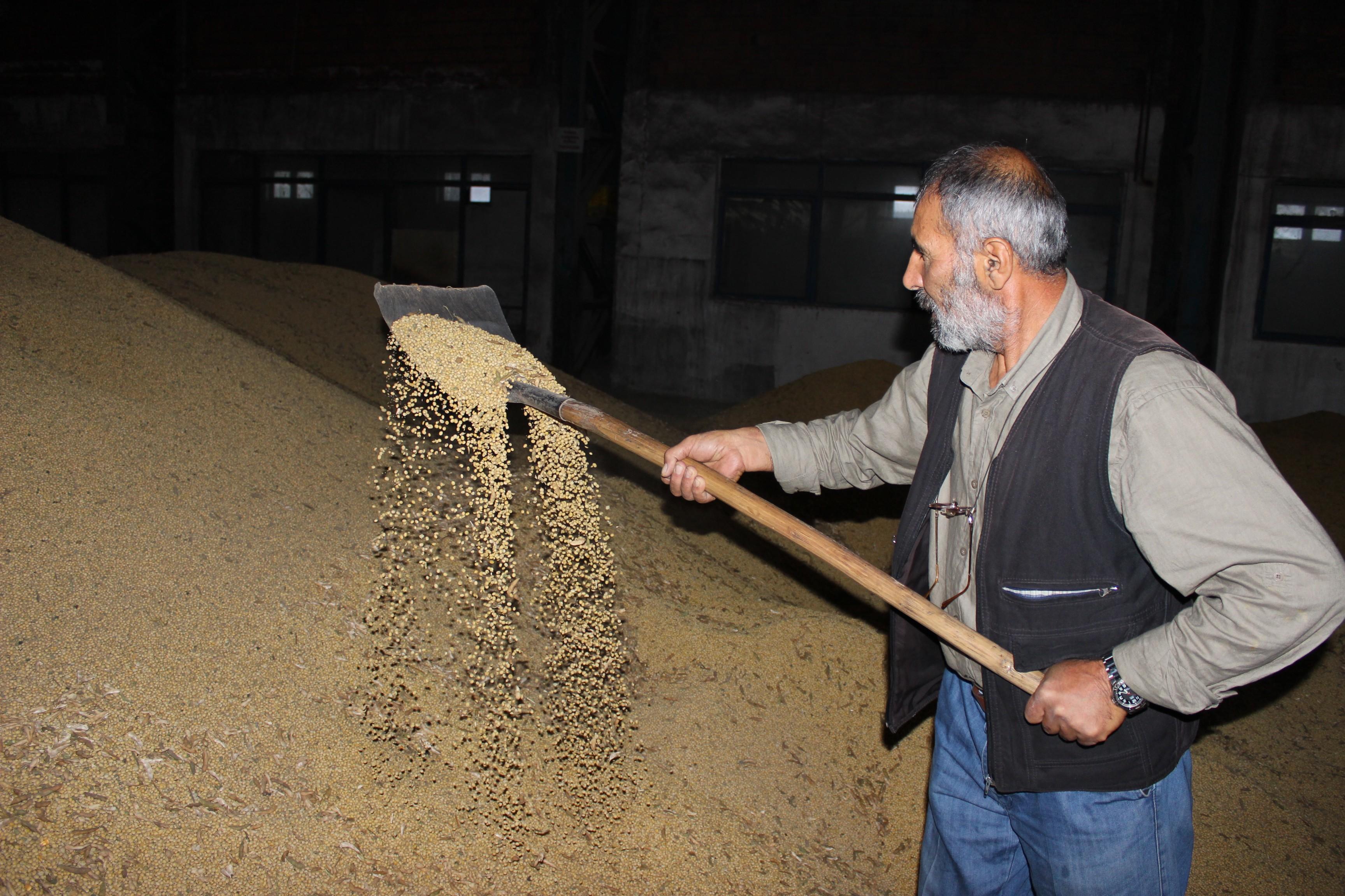 2 milyon tonluk soya ithalatına bakanlık el attı