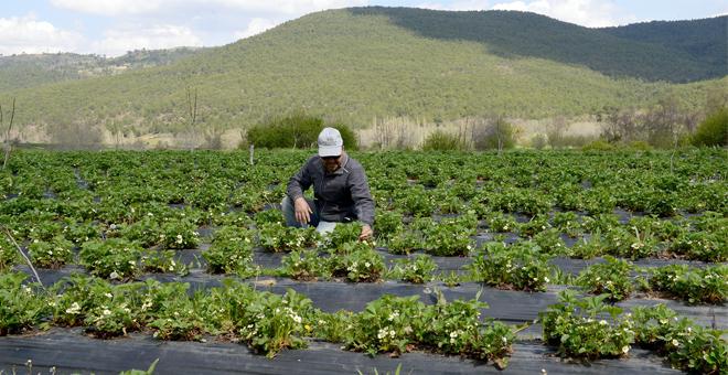 Tarımsal destekler 2016'da da devam edecek