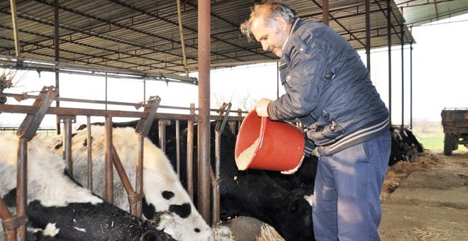 Süt üreticilerine yem ve süt darbesi