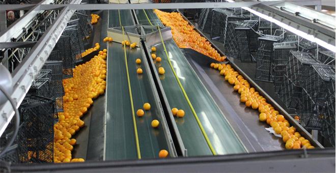 Yaş meyve sebze ihracatçıları gözünü Avrupa pazarına dikti