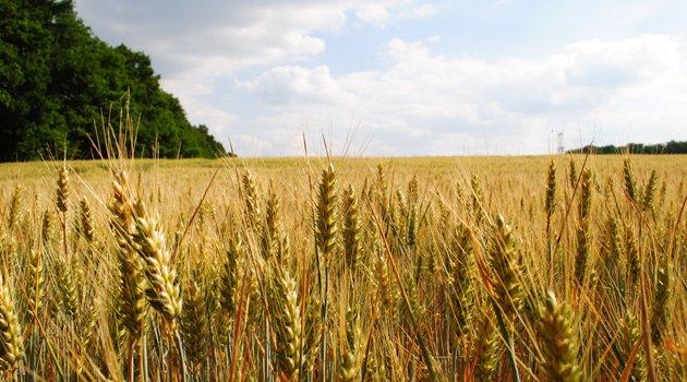 Buğdayda taban fiyat talebi