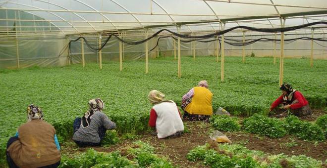 Kadınlar seracılıkla ekonomiye katkıda bulunuyor