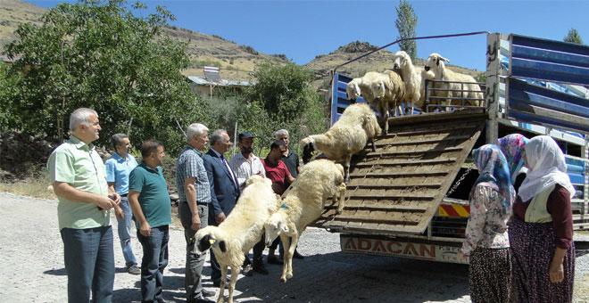 Genç çiftçilere hayvanları dağıtılıyor