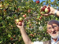 Kütahya'da elma bereketi