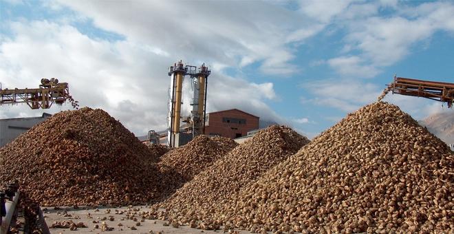 Kayseri Şeker'den şeker pancarına 220 TL rekor taban fiyat
