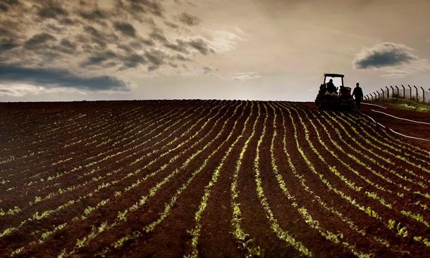 Ordu'da 'genç çiftçiliğe' 3 bin 548 başvuru