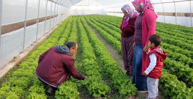 Sera kuran genç çiftçiler kışlık sebze üretimine başladı