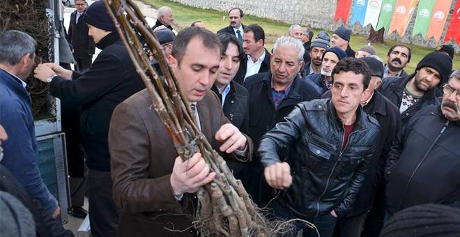 Çiftçilere ceviz fidanı dağıtıldı