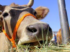 2016 yılı Hayvansal Üretim İstatistikleri açıklandı