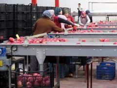 Genç girişimci, devletten aldığı destekle Orta Doğu'yu Isparta 'elma'sıyla buluşturdu