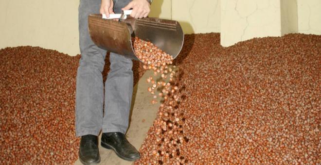 Türkiye'nin ilk fındık borsası alımlar için gün sayıyor