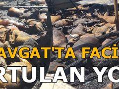 Manavgat'ta facia! Kurtulan yok! 550 küçükbaş hayvan…