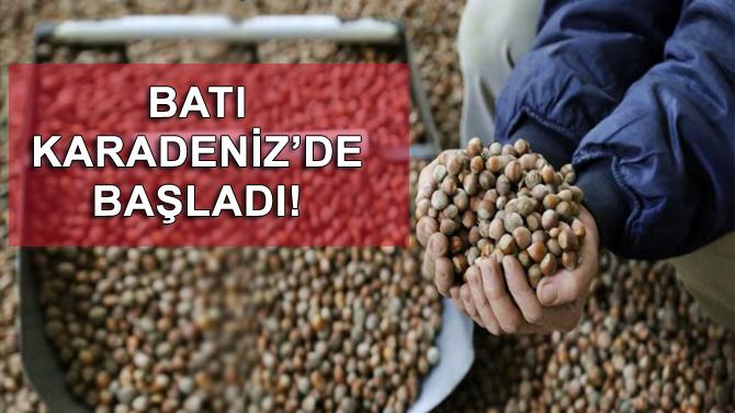 Batı Karadeniz'de fındık hasadı başladı