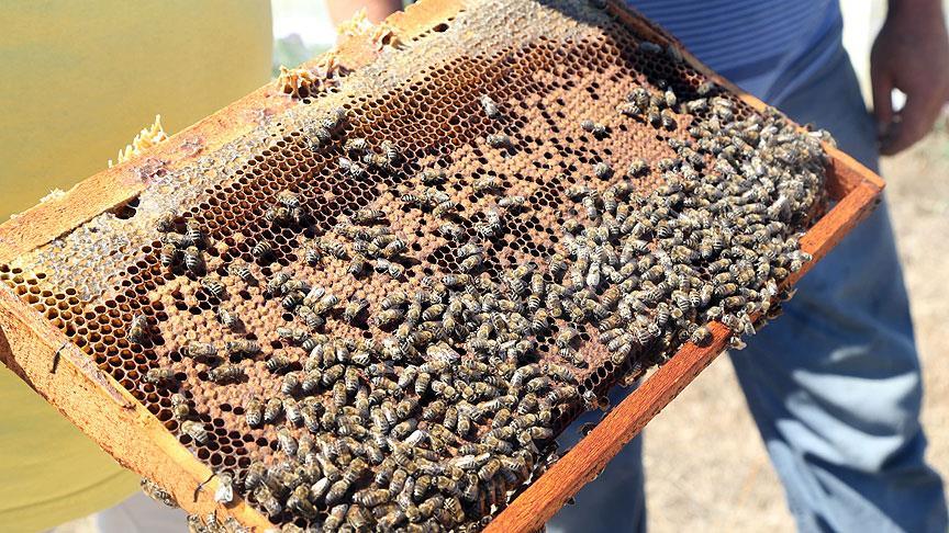 Dayanıklı arı kolonileri için 'Arı keki' üretti