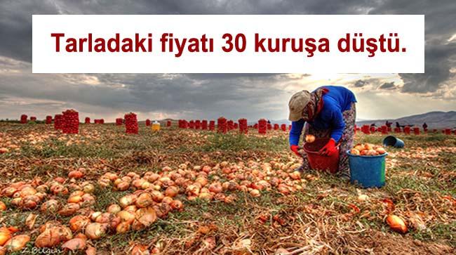 Soğanın tarladaki fiyatı 30 kuruşa düştü