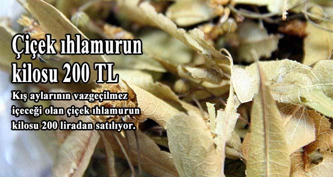 Çiçek ıhlamurun kilosu 200 TL