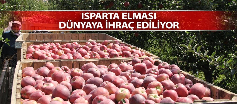 Elmanın başkentinde hasat zamanı