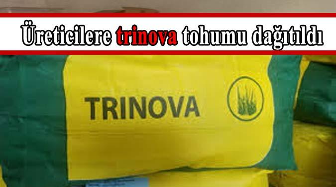 Lapseki'de üreticilere trinova tohumu dağıtıldı