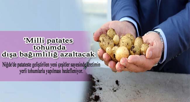 'Milli patates' tohumda dışa bağımlılığı azaltacak