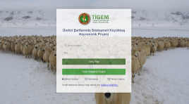 300 koyun başvurusu nasıl yapılacak? Koşullar açıklandı