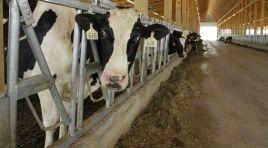 TCMB: Kırmızı etin pahalı olmasının nedeni yüksek yem giderleri