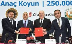 500 Bin Anaç Koyun' için imzalar atıldı