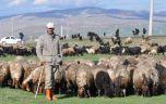 6 bin lira maaşla çalışacak çoban bulunamıyor