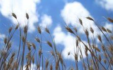 Tarımda 5,5 milyon kişi 120 milyon ton ürün üretiyor