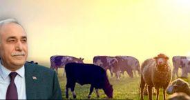 Hayvancılıkta hedef net ihracatçı olmak