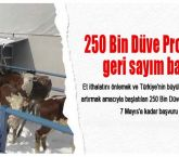 250 Bin Düve Projesi'nde geri sayım başladı