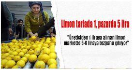 Limon tarlada 1, pazarda 5 lira