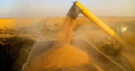 Toprak Mahsulleri Ofisi, 200 bin ton yemlik mısır alımı için uluslararası 10 ihale açtı
