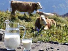 Süt sektörü 20 milyar liralık ciroya ulaştı