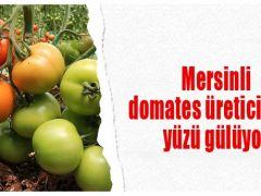 Mersinli domates üreticisinin yüzü gülüyor