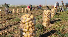 Tarım Kredi Kooperatiflerinden 'patates' açıklaması