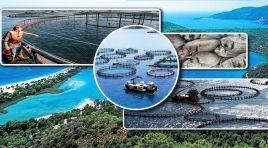 Bakanlıktan Mandalya Körfezi'ndeki balık çiftlikleri açıklaması!