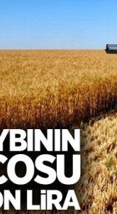 Çevik: Dane kaybının bilançosu 400 milyon lira