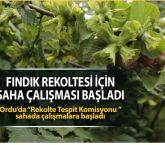 Ordu'da Rekolte Tespit Komisyonu sahada çalışmalara başladı.