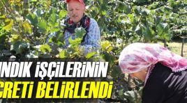 2018 Yılı Fındık Hasadı İşçi ve Patoz Ücretleri Belirlendi
