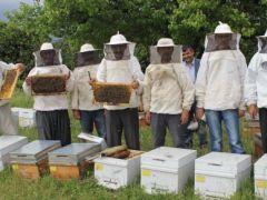 Arıcılar bu sistemle bal üretimini iki kat artırdı.